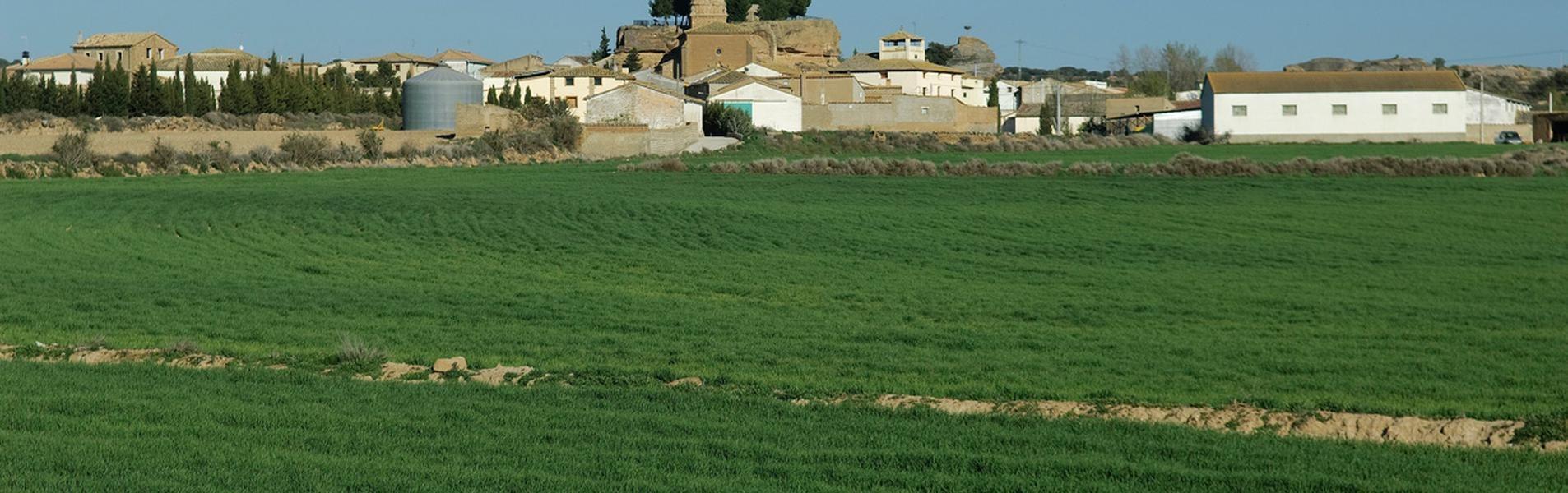 Albero Alto