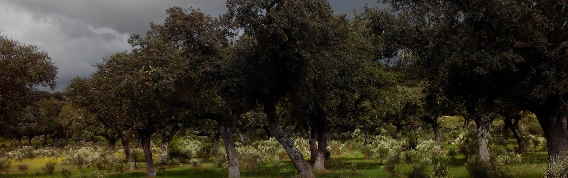 Campillo de Azaba