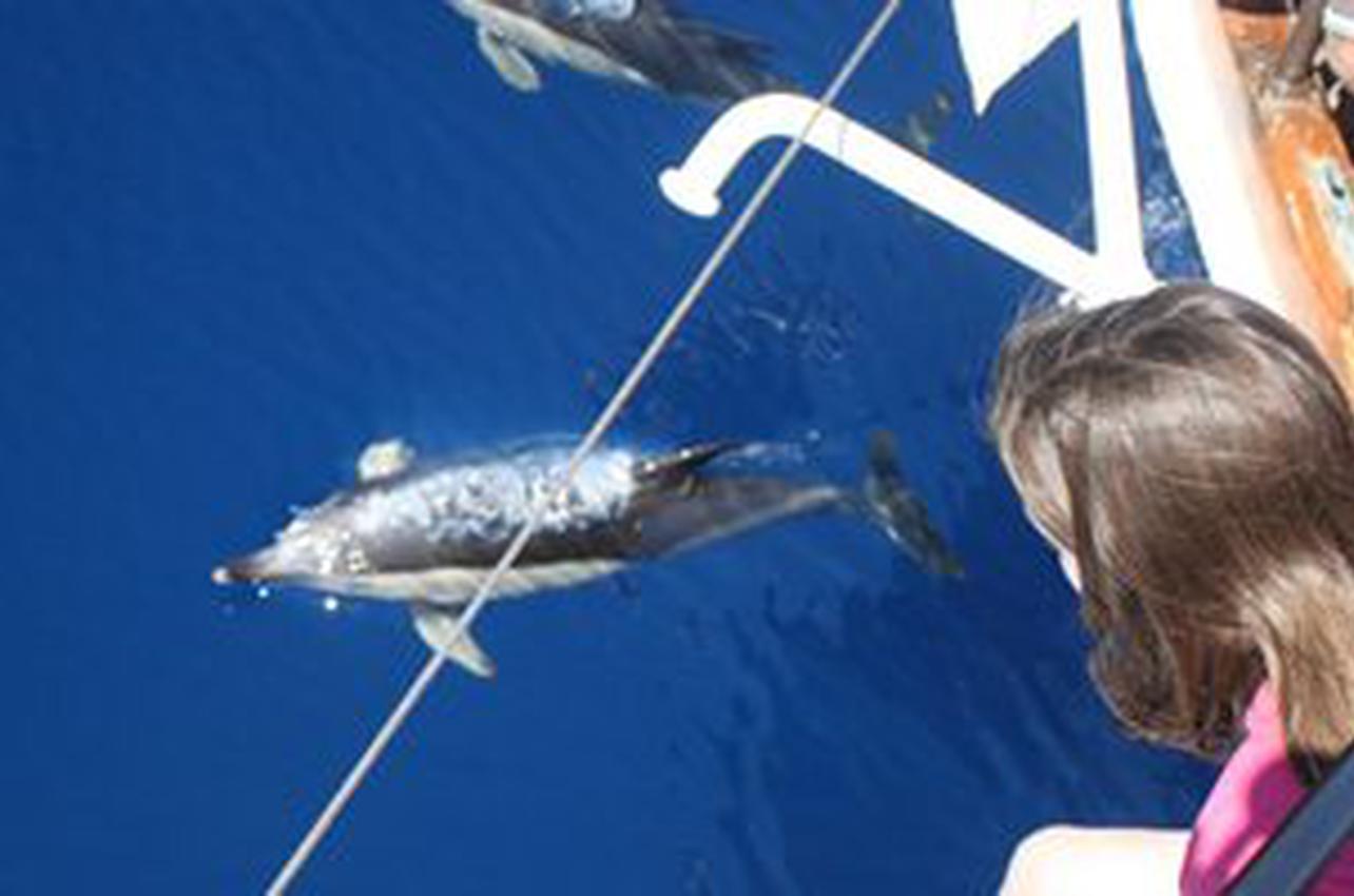 Delfines avistados desde la proa del Karyam. / Cedida por: Cetáceos & Navegación