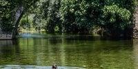 Mujer nadando en las aguas de la piscina natural de Carreciá, con el puente y la vegetación frondosa al fondo.