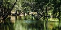 Los árboles de las dos orillas del río Arrago se juntan en la parte superior de sus copas formando un túnel.