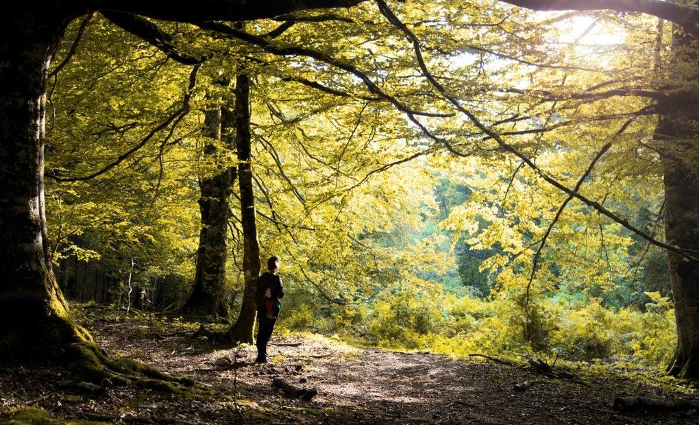 La Selva de Irati, en Navarra.