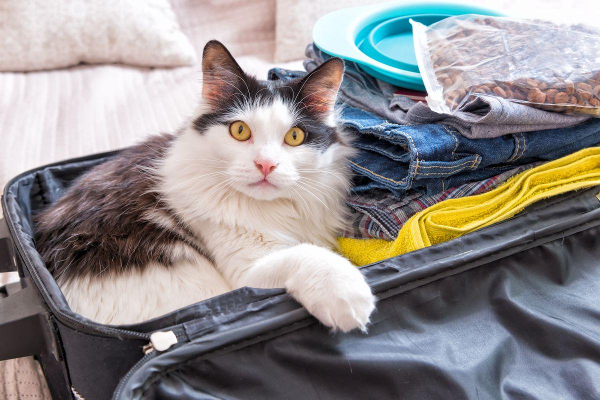 Viajar con nuestro gato no es misión imposible. Foto: shutterstock.