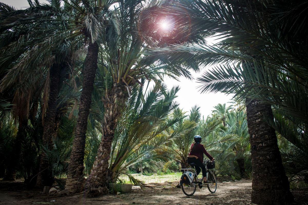 En bici por el Parque de Palmeras del Filet de Fora, Elche (Alicante).