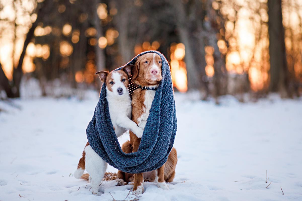 El frío llega para todos. Foto: shutterstock.