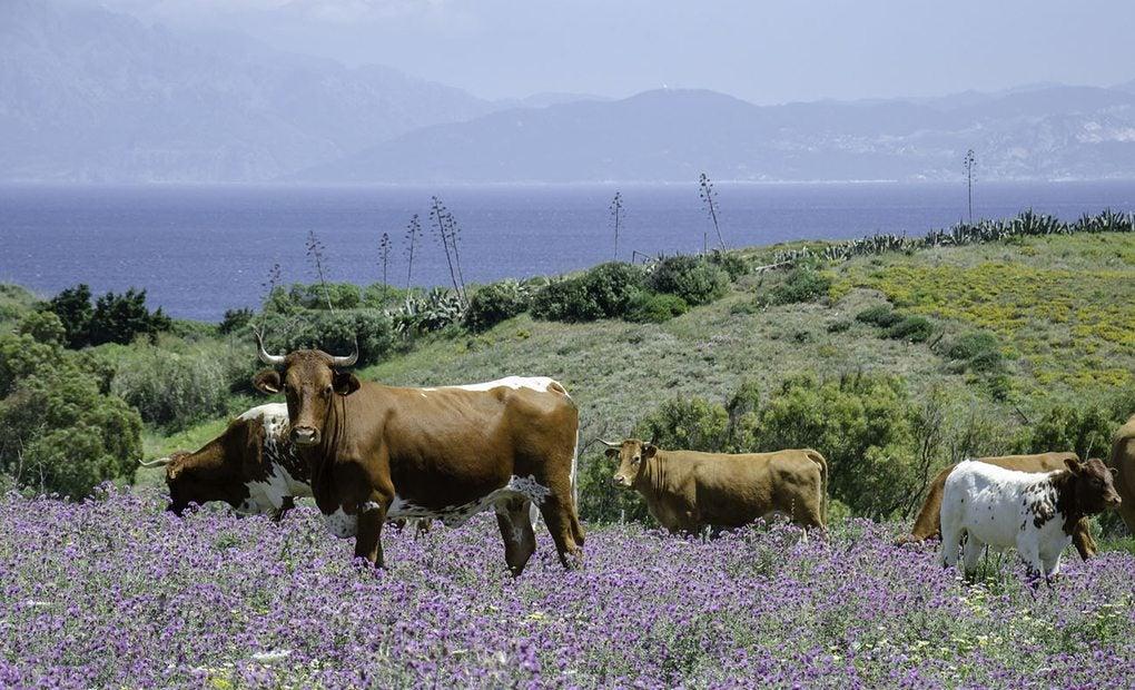 En Tarifa también podemos encontrar verdes prados al borde del mar.