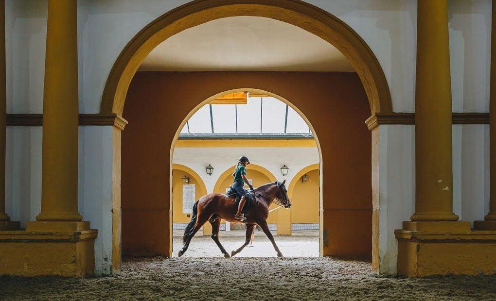 En Jerez el caballo siempre está presente