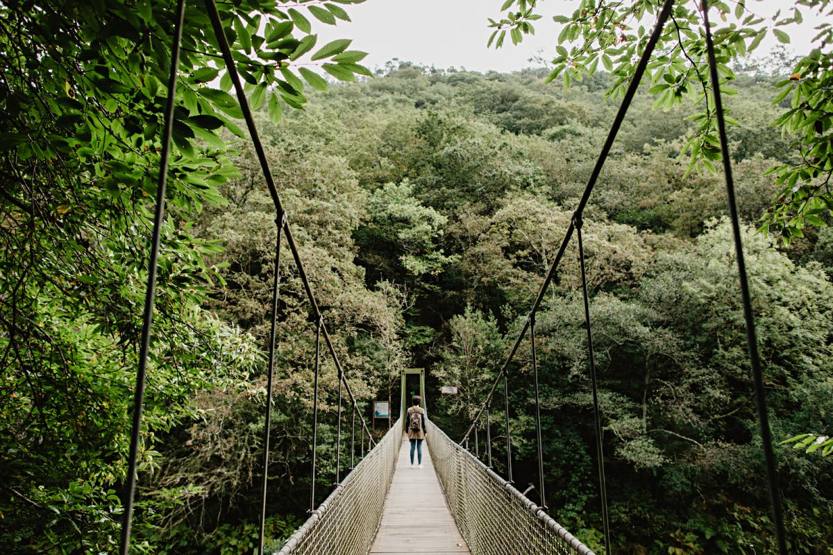 Uno de los dos puentes colgantes sobre el río Eume, para hacerse un buen Indiana Jones.