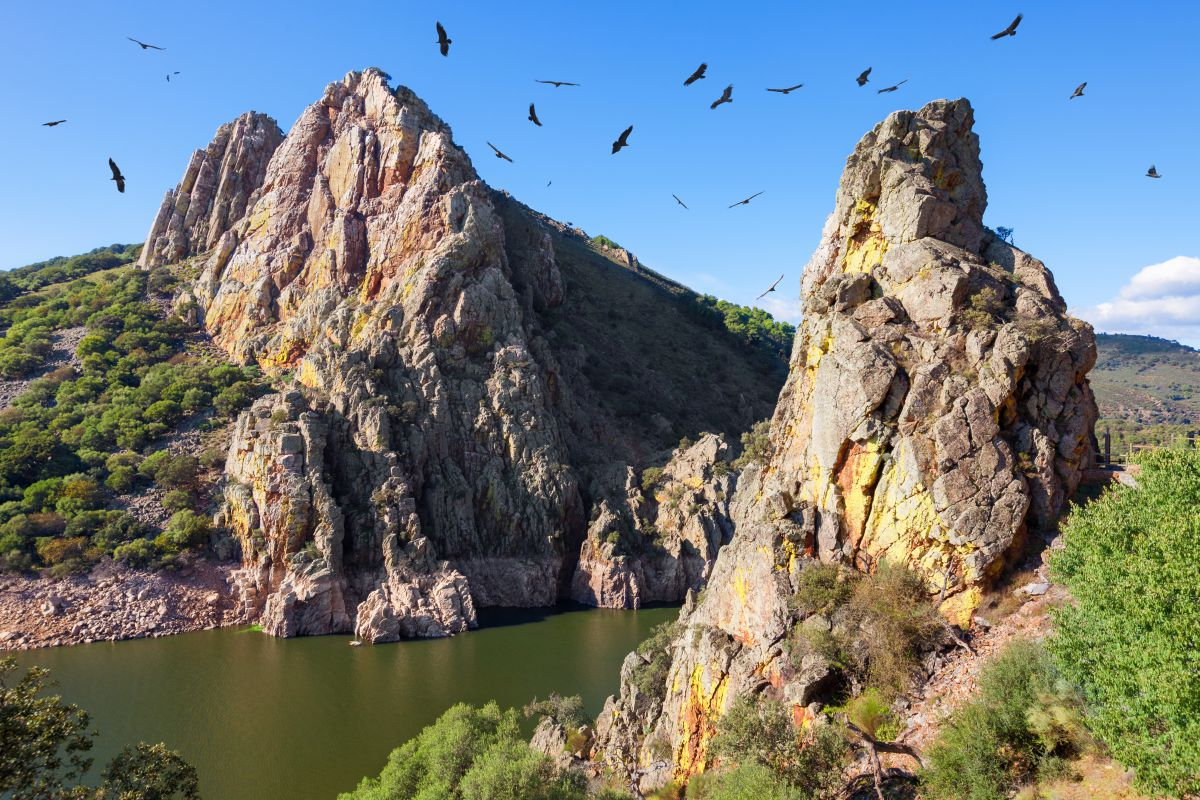 Los buitres, entre las aves más famosas de Monfragüe. Foto: Shutterstock.