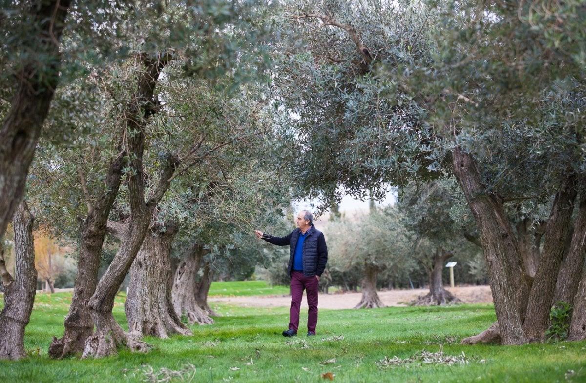 Francisco Urzaiz en su olivar de Fontellas.