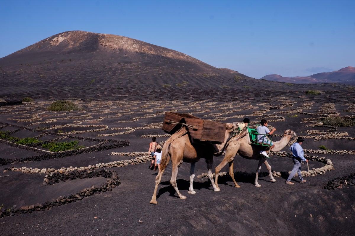 Vinos en Lanzarote: Fiesta de la Vendimia Tradicional en La Geria. Foto: Hugo Palotto