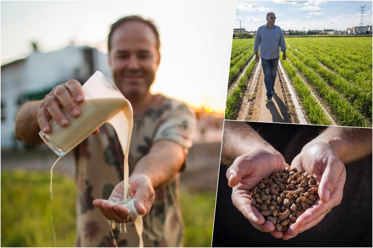 Comprobando la textura de una horchata artesanal, José Bellocq caminando por los cultivos de chufas y un puñado de chufas secas en Sequer lo Blanc, Alboraya (Valencia).