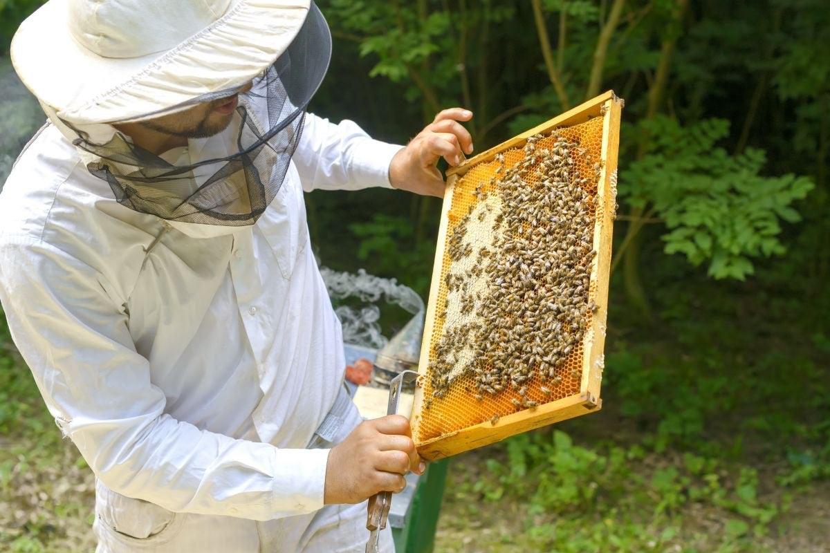 Miel, polen, jalea real, cera... son algunos de los productos que obtienen de estos paneles. Foto: Shutterstock.