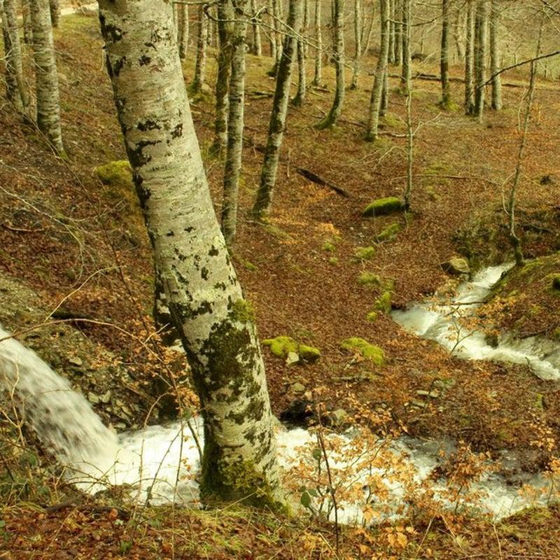 Selva de Irati. Navarra.